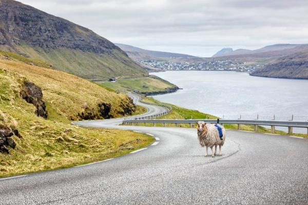 Google Street View helyett Sheep View