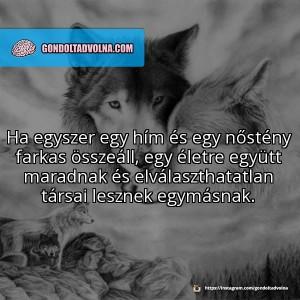 @gondoltadvolna: az egyik legnépszerűbb poszt az állatok hűségnek témájában készült